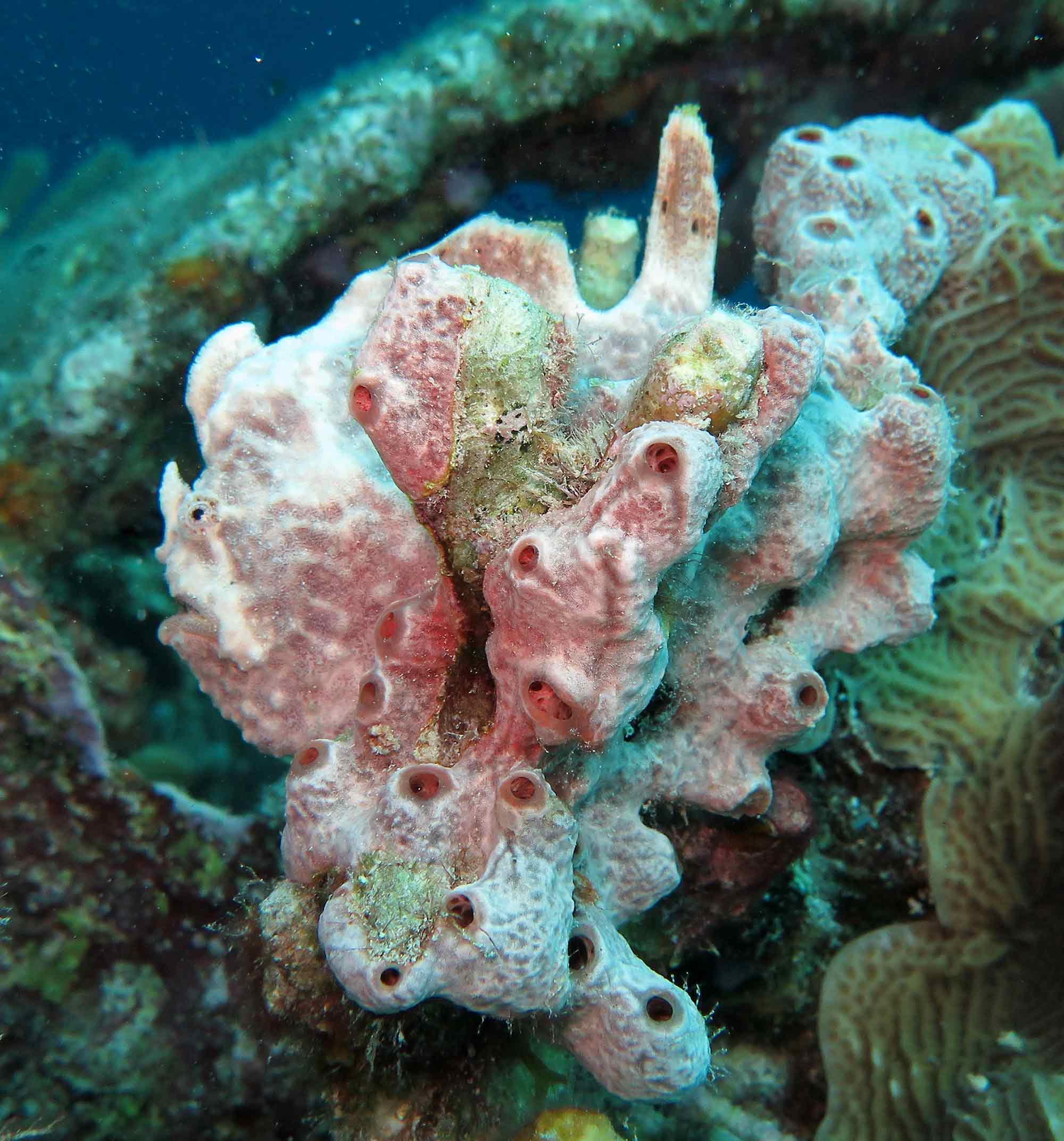 14052012Frogfish